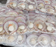 RADIATED SCALLOP which is packed. Stock Image