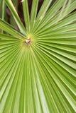 Radiating leaf. Everglades National Park, Florida Royalty Free Stock Photography