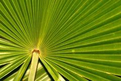 Radiating leaf. Everglades National Park, Florida Stock Image