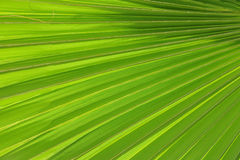Radiating palm frond pattern Stock Photo