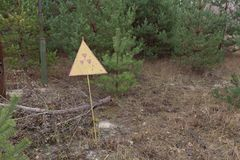 Radiation sign in forest near power plant in Chernobyl Exclusion Zone, Ukraine. Radiation sign in forest in overgrown ghost city Pripyat near Chernobyl nuclear Stock Photo