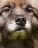 Radiatore anteriore del cane Immagini Stock