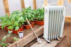 Radiatore di olio elettrico in serra con le piantine delle piante, piantanti molla in anticipo durante il freddo Immagini Stock