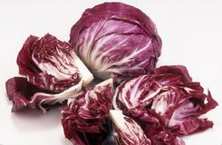 Radicchio Royalty Free Stock Images
