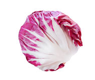 Radicchio. Fresh radicchio red cabbage isolated on white background Royalty Free Stock Photography
