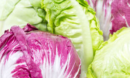 Radicchio And Baby Cos. Royalty Free Stock Images