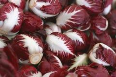 Radicchio background. Round variety of home grown bio organic radicchio red salad on farmers market Royalty Free Stock Image