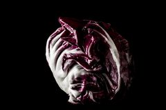Radicchio Royalty Free Stock Photography