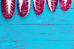 Radicchio border in a descending line. Radicchio, or Italian leaf chicory, border in a descending diagonal line over a blue crackle painted wooden background Stock Photos