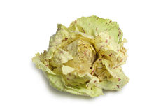 Radicchio CastelFranco lettuce. On white background Stock Photos
