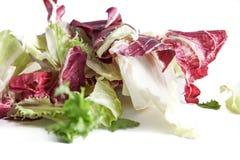 Radicchio da salada e alface verde isolados no fundo branco, no foco seletivo e e no borrão controlado Fotografia de Stock