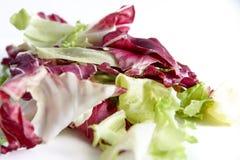 Radicchio da salada e alface verde no fundo branco, no foco seletivo e e no borrão controlado Fotografia de Stock Royalty Free