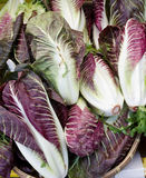 Radicchio on display. Freshly harvested radicchio on display at the farmers market Royalty Free Stock Photography