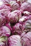 Radicchio. Heads of fresh purple and white raddicchio or Italian chicory for sale in the vegetable market Stock Image