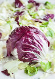 Radicchio with iceberg, romaine lettuce leaves Royalty Free Stock Photos