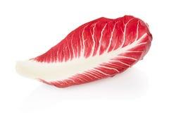 Radicchio leaf, red salad Royalty Free Stock Photography