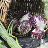 The radicchio lettuce in wicker basket for sale. Radicchio lettuce in wicker basket for sale Royalty Free Stock Photos