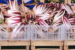 Radicchio purple vegetables. Fresh organic radicchio vegetables pile in plastic crates sold on market stall Stock Image