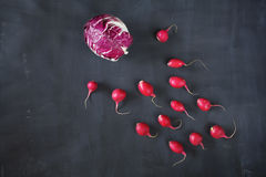 Radicchio and radish, flat lay. Good copy space Stock Photos