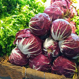 Radicchio. Red chicory in a market shop Royalty Free Stock Images