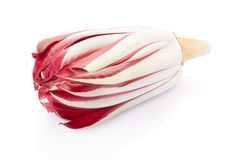 Radicchio, red chicory. Radicchio, red Treviso chicory on white, clipping path included Royalty Free Stock Images
