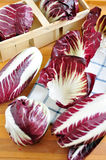 Radicchio. Red chicory (Radicchio), typical North Italy (Veneto region) vegetable Royalty Free Stock Photo