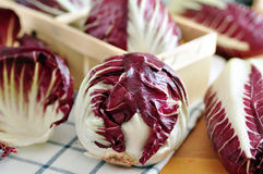 Radicchio. Red chicory (Radicchio), typical North Italy (Veneto region) vegetable Royalty Free Stock Photos