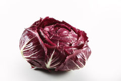 Radicchio red Chioggia Royalty Free Stock Photography