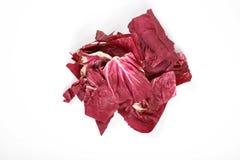 Radicchio, red salad isolated on white background.  Royalty Free Stock Photo