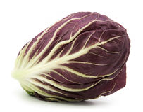 Radicchio red salad  Stock Photography