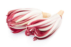 Radicchio, red Treviso chicory. On white, clipping path included Royalty Free Stock Photo