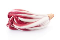Radicchio, red Treviso chicory. On white, clipping path included Stock Photography