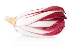 Radicchio, red Treviso chicory. On white, clipping path included Royalty Free Stock Photos