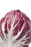 Radicchio rosso close up. On white background Royalty Free Stock Photography