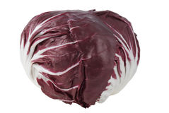 Radicchio rosso di Chioggia cutout. Close-up of fresh Italian Radicchio rosso di Chioggia plant. A cross between two chicory varieties, Radicchio rosso di Stock Photography