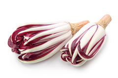 The Radicchio Rosso di Treviso. Isolated on white background Stock Image