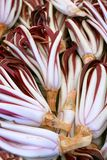 Radicchio Rosso di Treviso. On farmers market, background image Royalty Free Stock Photos
