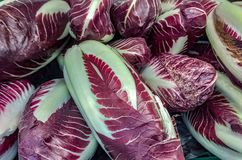 Radicchio rosso di Treviso is an Italian fruit and vegetable product with a Protected Geographical Indication. The red radicchio o. F Treviso is a variety of royalty free stock photo