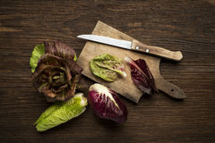 Radicchio Salad Royalty Free Stock Images