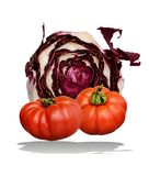 Radicchio and tomatoes. An isolated cut up radicchio of Treviso origins and two tomatoes on white background Stock Image