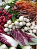 Radicchio y nabos del mercado de los granjeros Imagen de archivo libre de regalías