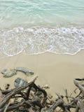 Radice alla spiaggia di sabbia Immagini Stock