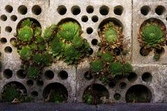 Radice comune della casa in blocchi in calcestruzzo grigi con differenti fori rotondi graduati fotografia stock libera da diritti