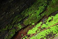 Radice consumata dell'albero con struttura ondulata e muschio che cresce nelle crepe Fotografia Stock