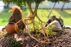 Radice dei bonsai Immagine Stock