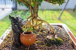 Radice dei bonsai Fotografia Stock Libera da Diritti
