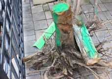 Radice dell'albero Fotografia Stock Libera da Diritti