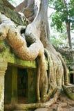 Radice dell'albero a Angkor Wat Fotografia Stock
