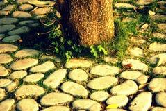 Radice dell'albero con la pietra Fotografia Stock Libera da Diritti