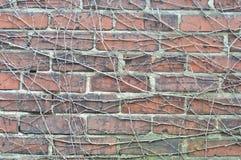 Radice dell'albero della parete Fotografia Stock Libera da Diritti